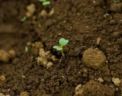 良い土壌の条件