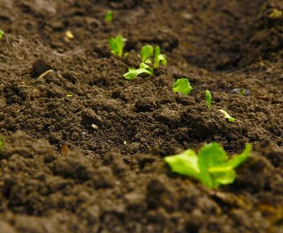 土壌改良材の働き